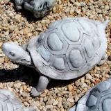 Illatokkal a rosszkedv ellen- teknős